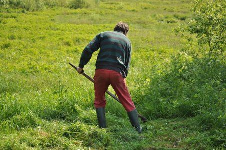 火曜日に芝刈り