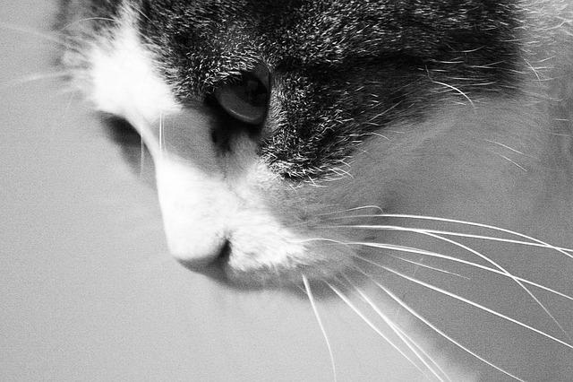 PetraBlahoutova / Pixabay