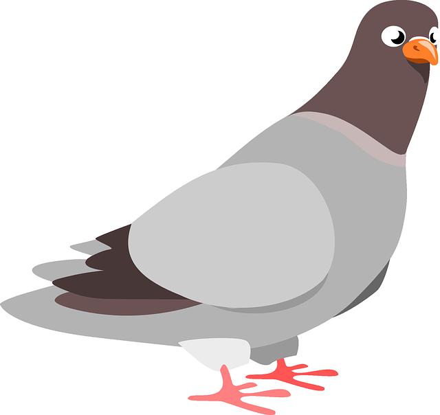 鳩を使った7つの英語表現