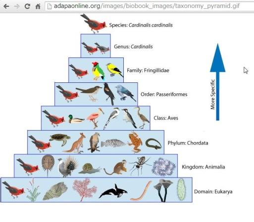 Weblioを活用した英単語の覚え方 taxonomy画像